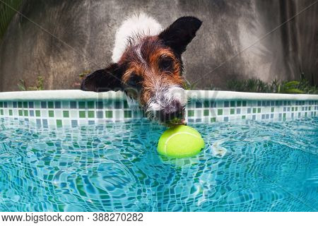 Funny Photo Of Jack Russell Terrier Puppy Playing With Fun In Swimming Pool - Jump, Dive Deep Down T