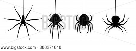 Halloween Spiders Web Vector. Black Spider On White Background. Danger Insect. Horror Banner, Scary