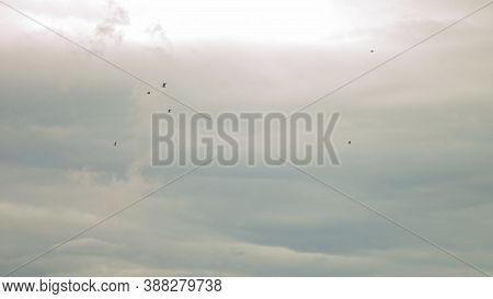 Seagulls Fly Against The Blue Sky. A Flock Of Birds Floating In The Air Currents Of The Wind. A Larg