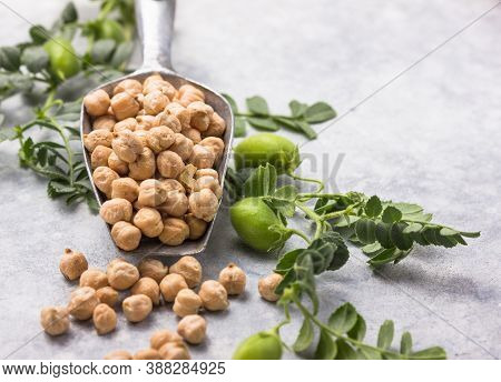 Uncooked Dried Chickpeas With Raw Green Chickpea Pod Plant. Dry Chickpeas Or Garbanzo Beans In Ceram