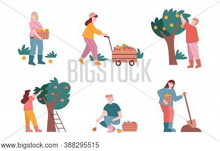 Man And Woman Characters Harvest Fruits In Farm Graden. Vector Illustration Set Of Farmer People Wor