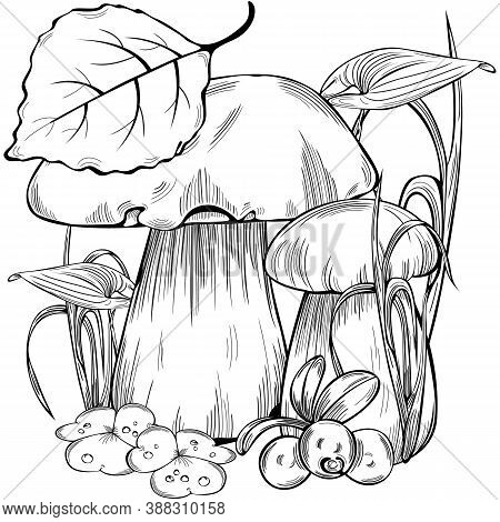 Boletus Edulis Or Cep With Forest Grass. Vector Image