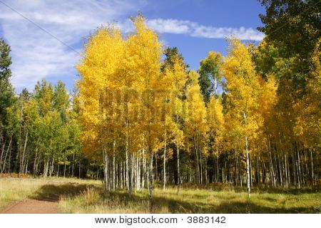 Fall Color In Arizona