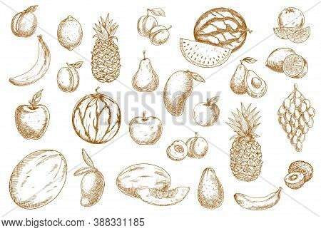Fruits Sketch, Food Icons Of Tropical Exotic Isolated Vector Hand Drawn Fruits. Sketch Hatching Frui
