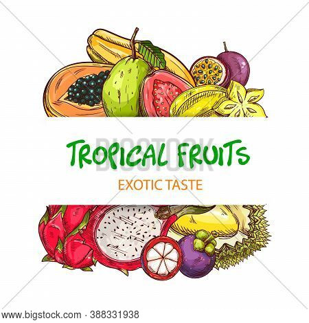 Exotic Tropical Fruits Banner With Sketch Pitaya, Papaya Or Pawpaw And Guava, Maracuya, Durian And M