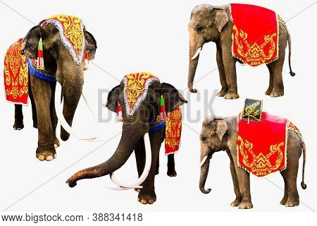 Set Of Elephan Raising  Trunk ,elephant Has Beautiful And Large Isolated On White Background. Colorf