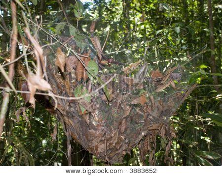 huge spider nest in the Amazon Brazil poster