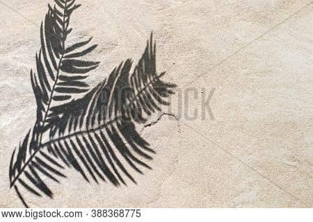 The Shadow Of A Tropical Leaf On A White Sand