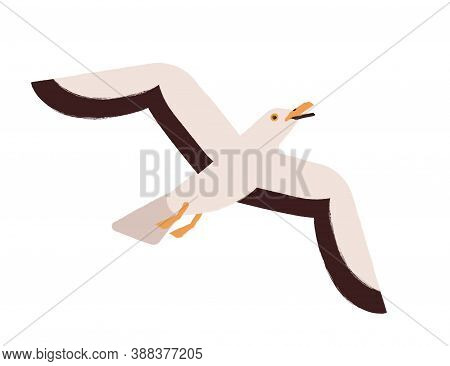 Beautiful Colorful Seagull Flying Up Or Take Off With Open Beak Vector Flat Illustration. Marine Bir