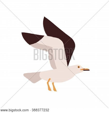 Adorable Polar Bird Flying With Raising Up Wings Vector Flat Illustration. Arctic Or Atlantic Inhabi