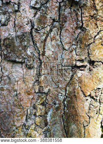 Textured Grunge Wooden Background. Dark Yellow Natural Backdrop.