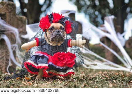 French Bulldog Dog Dressed Up With 'la Catrina' Halloween Costume With Red And Black Dress With Rose