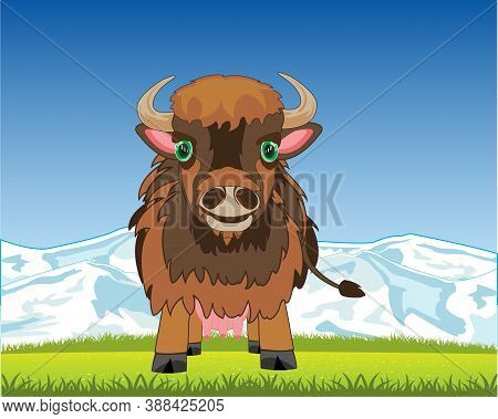 Wildlife Yak On Background To Glade In Mountain