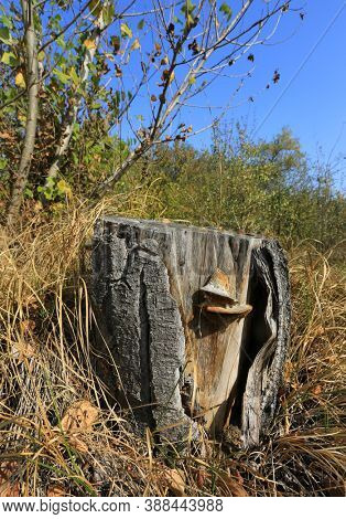Wooden stub among dry grass in autumn forest. Sunny autumn day