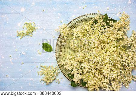 Fresh Twigs Of Elderflower In A Bowl Ready To Prepare Homemade Elderflower Sirup. Top View With Copy