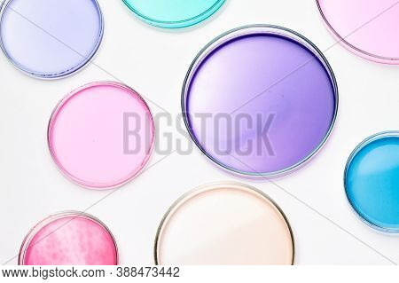 Petri Dish With Colorful Liquid Or Media For Bacterial Colonies In Biomedical Analysis. Grafting Bac