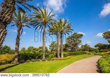 Warm sunny day. Stone paved scenic walkway. Israel. Great walk in a clean well-kept park. The magnificent botanical park on the slopes of Mount Carmel