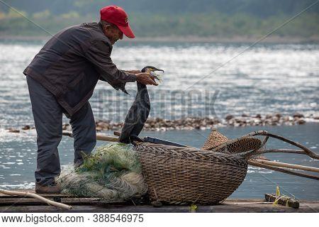Yangshuo, Guilin, Guangxi Province, China - November 12, 2019: Cormorant Fisherman Taking A Fish Out