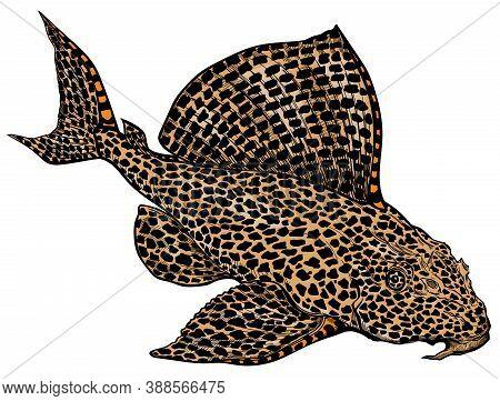 Leopard, Sailfin Or Clown Pleco. Leopard Plecostomus. Suckermouth Catfish. Freshwater  Aquarium Fish