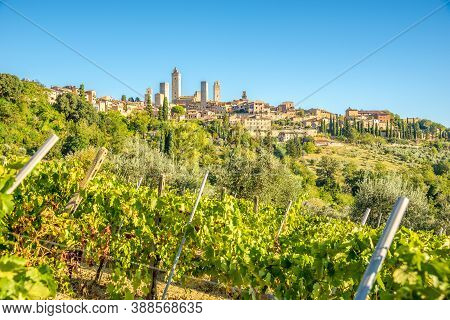 View At The Town Of San Gimignano From Wineyards - Italy