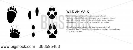 Banner Of Track Of Forest Animals, Traces Of A Bear And A Hare And A Wolf , Vector Illustration