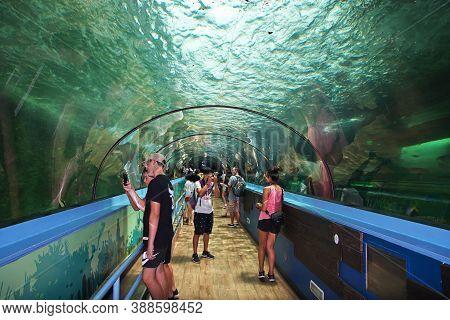 Sydney, Australia - 01 Jan 2019: Aquarium With Great White Shark In Sydney, Australia