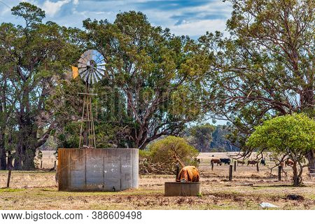 Australian Windmills Have Successfully Pumped Water In The Australian Outback Into Troughs For Their