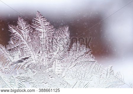 Ice And Frost On A Window Pane In Winter. The Drawing Looks Like A Magical Plant. Weather Forecast: