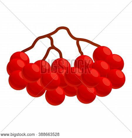 Autumn Party Red Rowan Icon. Cartoon Of Autumn Party Red Rowan Vector Icon For Web Design Isolated O