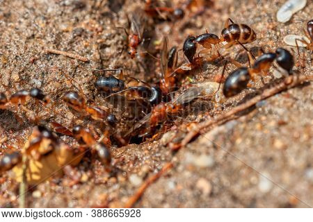 soldier termites and flying ants digging into the ground