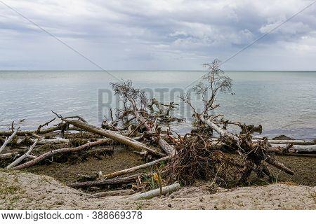 Storm Broken Trees On The Baltic Sea Coast