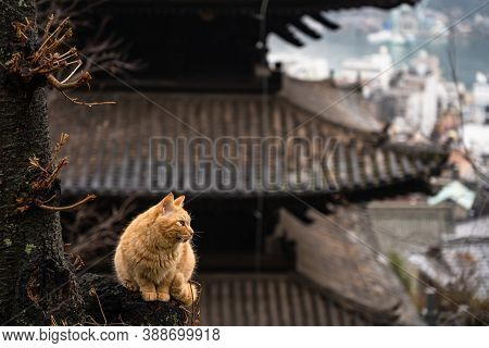 Neko-no-hosomichi Cat Alley In Onomichi City. Lots Of Cats Can Be Found In This Japanese Traditional