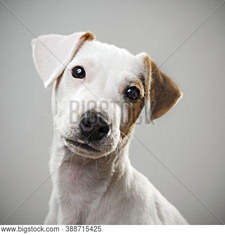 Dog On Street. Small Dog On Street. Close Up Of Dog. Cute Little Dog Portrait. Beautiful Dog. City D