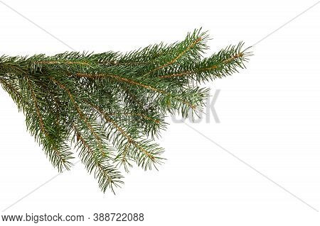 Green Fir Branch Isolated On White Background, Christmas Fir.