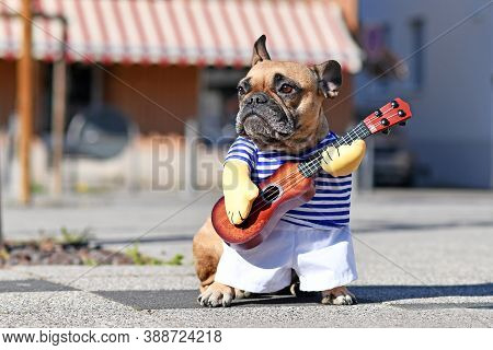 Funny Dog Cosutume On French Bulldog Dressed Up As Street Perfomer Musician Wearing Striped Shirt An