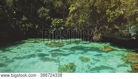 Closeup limpid lake with salt water at exotic green plants. Emerald saltwater serene scene at tropical leaves. Relaxing and calm summer scape of Sumba Island landmark, Indonesia,