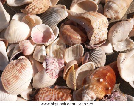 Shells Close-up