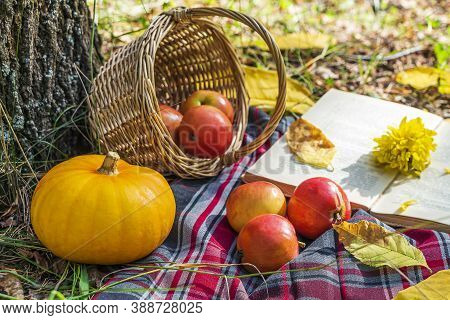 Autumn Still Life With Checkered Plaid, Wicker Basket, Apples, Pumpkin And Open Old Book. Romantic A