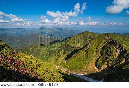 Summer Mountain Rocky Ridge, Rhododendron Flowers And Dwarf Alpine Pine Bushes. Marmaros Pip Ivan Mo
