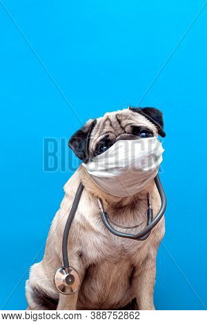 Portrait Of A Cute Pug Dog As A Medicine Doctor With A Stetoscope And Medical Mask On Its Face