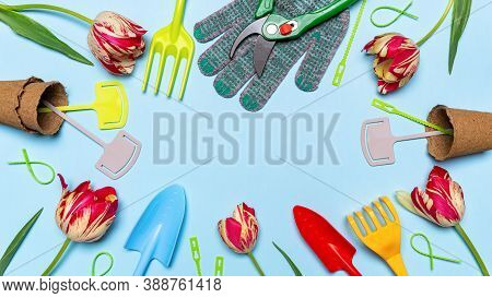 Fresh Tulips Flowers, Multi-colored Garden Tools, Garden Signs And Gloves On Blue Pastel Background.