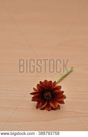 Colorful African Daisy On A Wooden Table