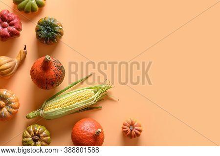 Autumn Harvest, Colorful Pumpkins, Corncob On Orange Background. Thanksgiving Day And Halloween Deco