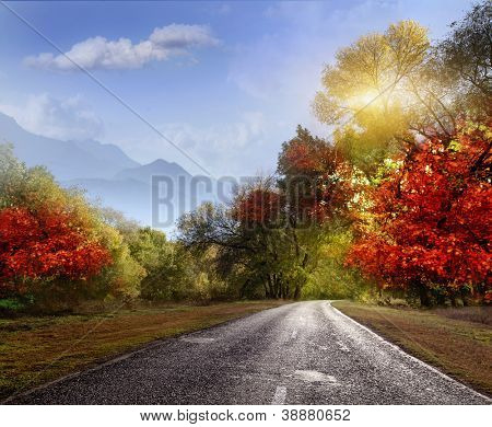 paved road in the autumn forest