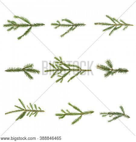 Evergreen christmas fir pine tree branch set on white for design