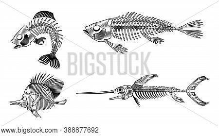 Black Bass Fish Skeleton Flat Set For Web Design. Vintage Monochrome Marine Animal Bones Isolated Ve