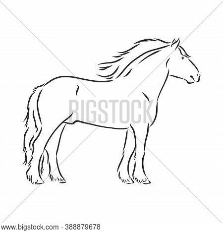 Hand-drawn Silhouette Of A Prancing Heavy - Harnessed White Horse On A White Background, Heavy Horse