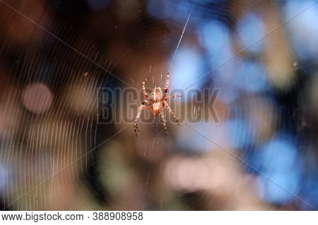 Spider On A Web Waiting For Prey, Beautiful Coloring Of The Spider Attracts The Victim