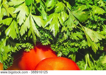 Fresh Parsley Bunch Close Up Background. Cooking Ingredient. Vegetarian Food