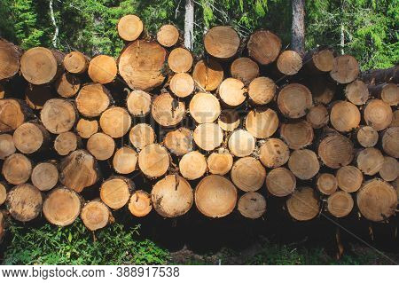 Stack Of Logs In The Forest. Timber Cutting Industry